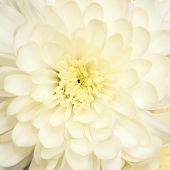 beautiful bouquet with  chrysanthemum, background