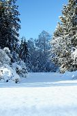 foto of winter scene  - Beautiful winter scene - JPG