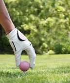 Ladies hand placing a pink golf ball on a tee.