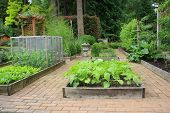 Beautiful backyard organic vegetable garden.