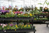 Flower nursery showing a large variety of flowers for sale.