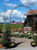 Barns Thru Arbor