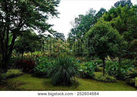 Garden In San Gerardo De