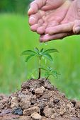 Plants Agriculture. Growing Plants. Plants Seedling. Hands Nurturing And Watering Young Baby Plants  poster