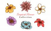 Vector Illustration Of Tropical Flowers In Sketch Style For Design, Website, Background, Banner. Tro poster