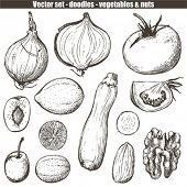 vector set - doodles - vegetables