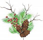 Christmas composition. Branches tree, branch with berries, cones, snow. Vector illustration.