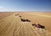 Four harvesters combining in formation in a field on the open prairie