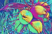 Yellow Coconut On Palm Tree Digital Illustration. Coco Nut Bunch Psychedelic Banner Template. Exotic poster