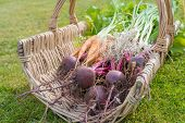 Growing Your Own Vegetables Can Result In A Wicker Basket Called A Trug Like This Filled With An Arr poster
