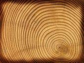 Holz Schnitt Textur