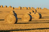Hay Bales On The Field After Harvest. Agricultural Field. Hay Bales In Golden Field Landscape. poster