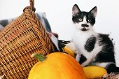 Adorable Kitty Sitting At Pumpkin And Zucchini In Cozy Wicker Basket In Light On Wooden Background.  poster