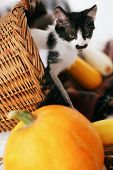 Cute Kitty Sitting In Wicker Basket With Pumpkin And Zucchini In Light On Wooden Background. Kitten poster