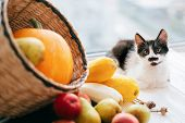Adorable Kitty Sitting At Pumpkin ,zucchini, Apples And Pears In Straw Basket In Light On Wooden Bac poster