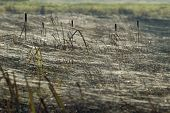 picture of baby spider  - Money Spider webs on rushes on Somerset Levels  - JPG