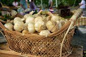 Basket Of Garlic