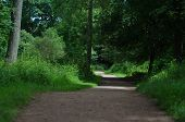 Pathway Through Woodland