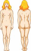 stock photo of pubic  - Vector educational illustration of a beautiful female nude - JPG