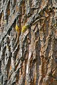 The Bark Of Forest Trees
