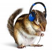 stock photo of chipmunks  - Funny chipmunk listening to music on headphones isolated on white - JPG