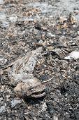 Peixes mortos no pântano seco