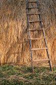 Ladder On Straw
