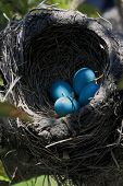 Close-up View Of Robin Bird Nest Over The Tree Vertical Orientation