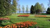 Springtime Tulips Feast, Morges, Switzerland
