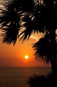 Sunset With Palm