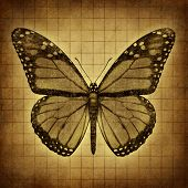 Butterfly Grunge Texture
