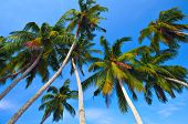 Palm trees in blue sky