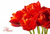 Beautiful bouquet of tulips isolated on white background