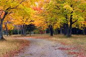 stock photo of bend over  - Michigan back road bends between golden and yellow trees in Upper Penninsula Michigan - JPG