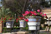Flowerpots In Seville, Spain