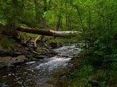 Forest Brook Under Fallen Tree
