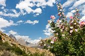 stock photo of skardu  - Karakorum Flora along the Braldu River Northern Pakistan - JPG
