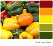 A background of fresh mixed peppers in a colour palette with complimentary colour swatches.