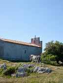 stock photo of headstrong  - Gray Donkey next to the church in Spain - JPG