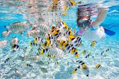 Woman snorkeling in clear tropical waters among colorful fish