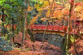 Red Bridge Nara Japan Autumn Color