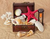 Sea shells, cockleshells, starfishes in a chest