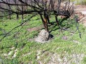 Anthill And Burnt Tree