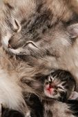 Mother Cat and her kitten in compassion