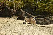 Australia Whitsunday