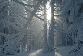 Fantastic Winter Forest