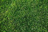 Close up shot of fresh spring geen grass.