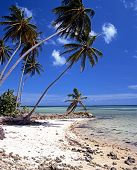 pic of west indies  - Palm Trees and beach Bon Accord Lagoon Tobago Caribbean West Indies