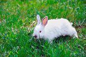 Bunny On A Green Grassy Lawn