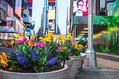Spring Planters Times Square